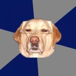 Perro Racista