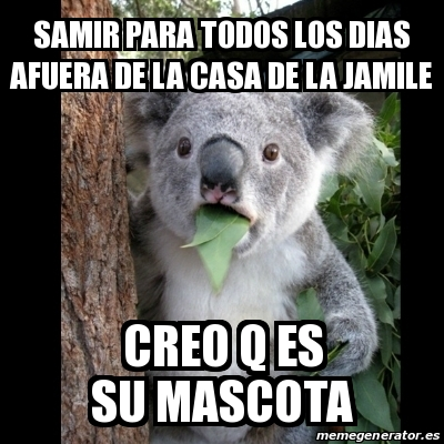 Meme koala samir para todos los dias afuera de la casa de la jamile creo q es su mascota - La casa de la mascota ...