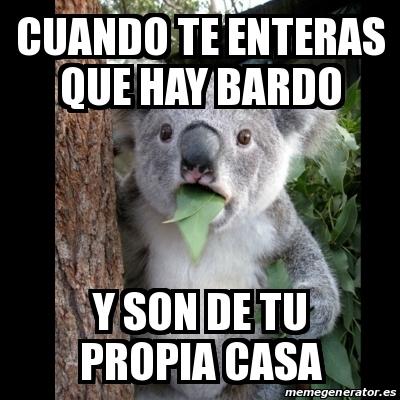 Meme koala cuando te enteras que hay bardo y son de tu for Hacer tu propia casa