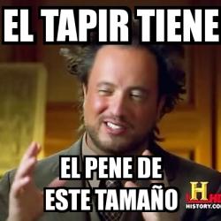 pene del tapir