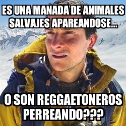 Meme bear grylls es una manada de animales salvajes apareandose o son reggaetoneros - Animales salvajes apareandose ...